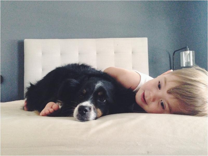 Toddler with Mini Australian Shepherd